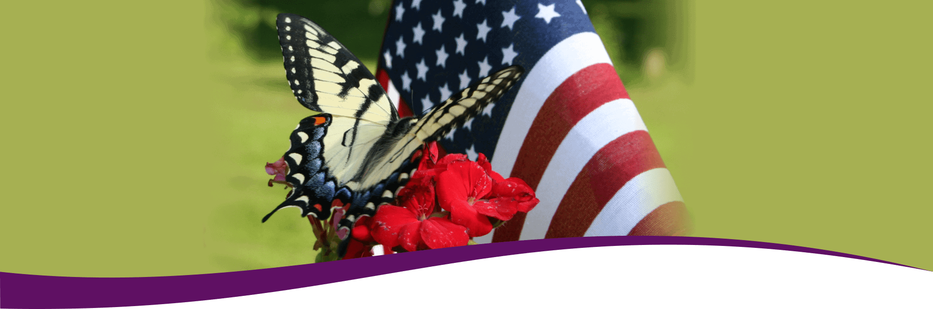 Beautiful butterfly on a red flower with American flag in the background